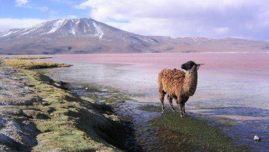 Letter from Los Misioneros Maristas Bolivia